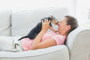 Happy woman playing with her yorkshire terrier on the couchの素材 [FYI00001076]