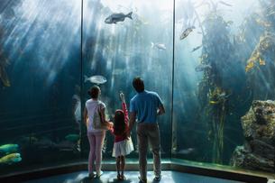 Family looking at fish tank FYI00006533
