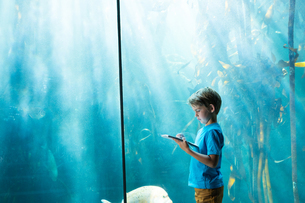 Young man drawing a fish in a tank FYI00006795