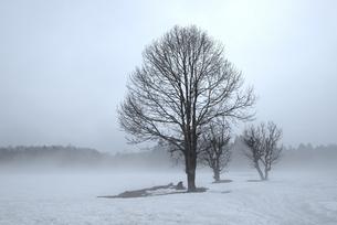 雪霧1 -白馬深空にて- FYI00023594