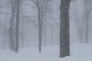 濃霧のブナ林 FYI00023597
