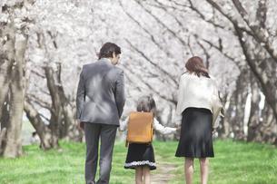 桜並木を歩く家族 FYI00023762