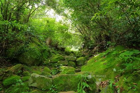山中の景色 FYI00024987