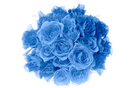 バラの花束 FYI00025216