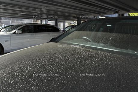 黄砂で汚れた車 FYI00026130