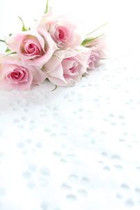 ピンクの薔薇 FYI00027023
