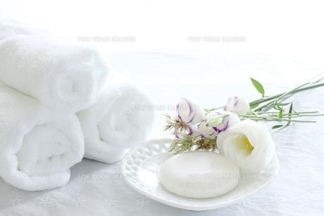 桔梗と石鹸 FYI00027507
