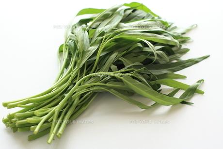 アジア食材のクウシンサイ空芯菜 FYI00029709