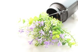造花とティンバーゲン FYI00031989