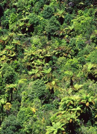 シダ類が群生する山 FYI00035218