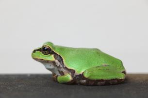蛙 FYI00036298