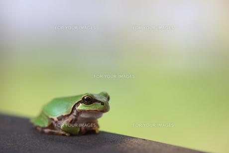 蛙 FYI00036307