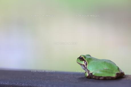 蛙 FYI00036308