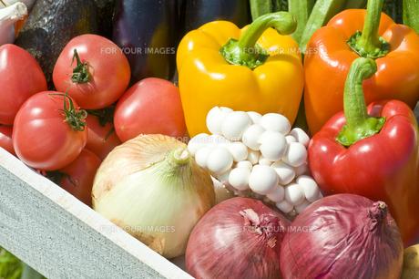 野菜 FYI00036871