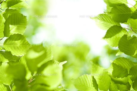 新緑 FYI00036885
