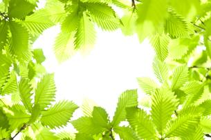新緑 FYI00036906