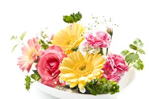 花 FYI00037535