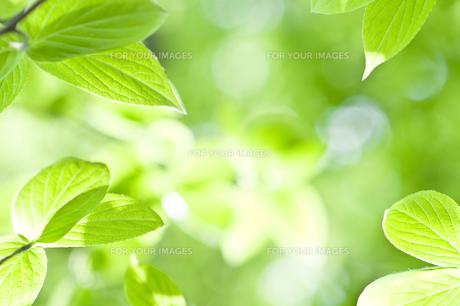 新緑 FYI00038163