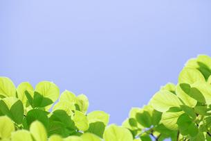 新緑 FYI00039634
