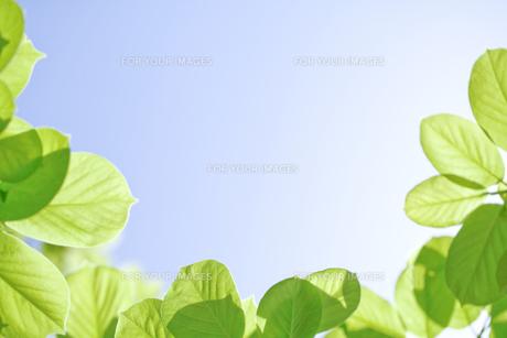 新緑 FYI00039663