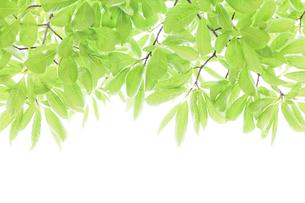 新緑 FYI00039675