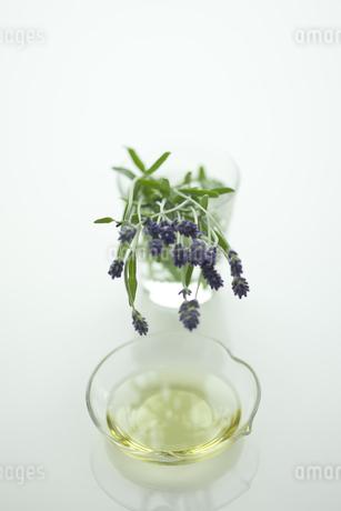 ラベンダーの花とアロマオイル FYI00041637
