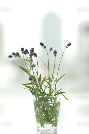 ラベンダーの花とアロマオイル FYI00041643