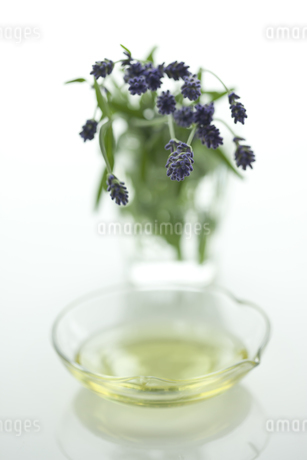 ラベンダーの花とアロマオイル FYI00041645