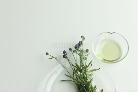 ラベンダーの花とアロマオイル FYI00041647