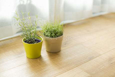 部屋の中にある観葉植物 FYI00042489
