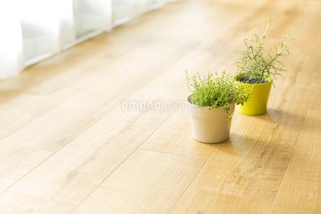 部屋の中にある観葉植物 FYI00042494