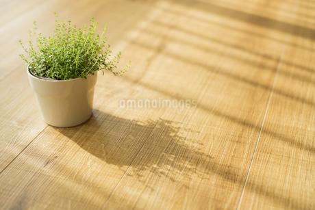 部屋の中にある観葉植物 FYI00042504