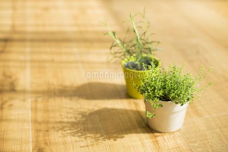 部屋の中にある観葉植物 FYI00042506