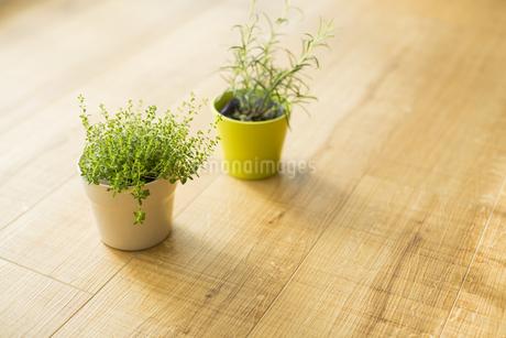 部屋の中にある観葉植物 FYI00042509