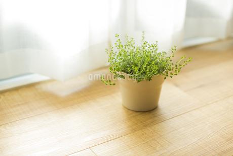 部屋の中にある観葉植物 FYI00042512