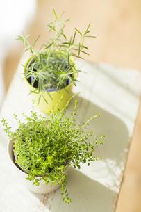 部屋の中にある観葉植物 FYI00042513