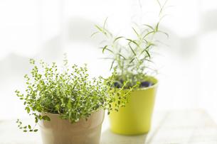 部屋の中にある観葉植物 FYI00042520