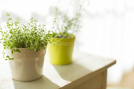 部屋の中にある観葉植物 FYI00042523