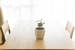 テーブルの上にある観葉植物 FYI00042750