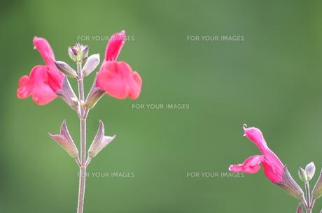 話しかける花 FYI00042989