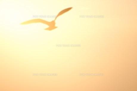 夕日を背にしたカモメのシルエット FYI00043004