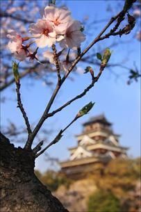 広島城 FYI00043116