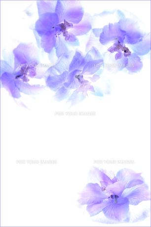 紫の花 FYI00043122