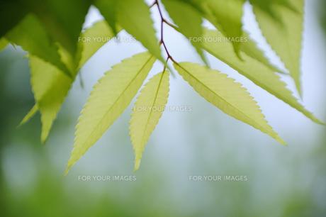 緑の葉 FYI00043135
