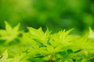 新緑 FYI00043157