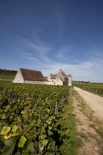 フランスのブドウ畑 FYI00044274