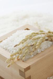 米と稲穂 FYI00044970