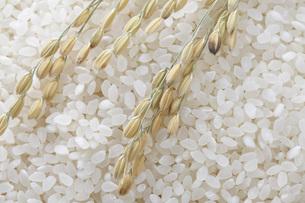 米と稲穂 FYI00045115