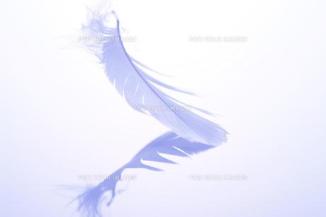 鳥の羽 Fyi00045133 気軽に使える写真イラスト素材 Foryourimages