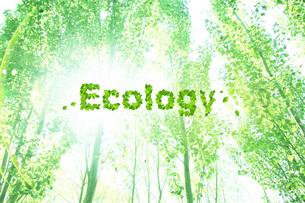 エコロジーイメージ FYI00045766